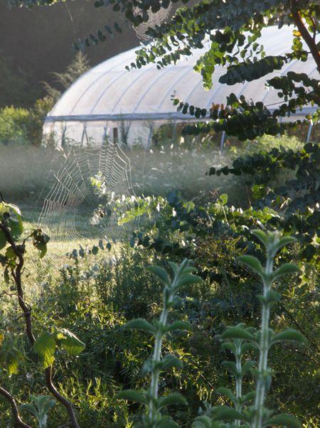 Windcrest Farm Organics