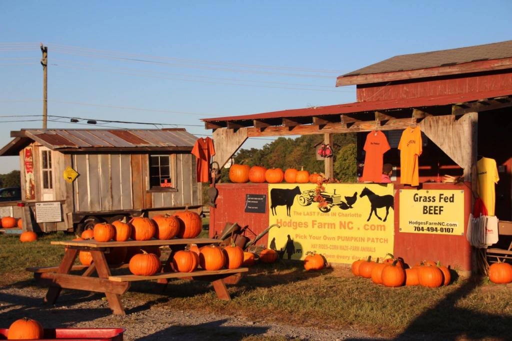 Hodges Family Farm